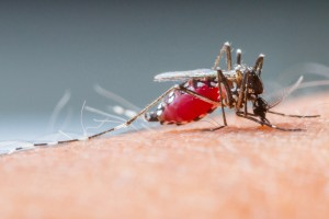 Mosquito 35