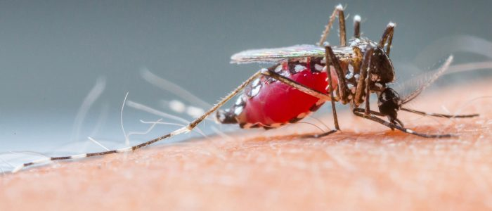 Mistakes Made By A Mosquito Control Services Company