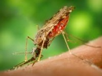 controlling mosquitoes 3